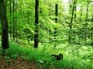 Naturpark Diemelsee_37
